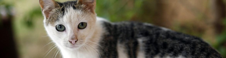 Запах кошачьей мочи в квартире - как устранить